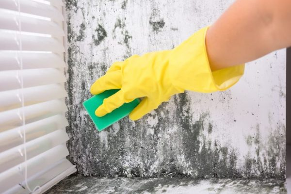 MOLD CLEANING SERVICES IN LIVERPOOL